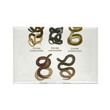 Antique Snakes Print Rectangle Magnet