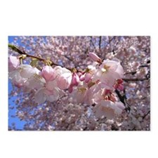 Funny Cherry blossoms Postcards (Package of 8)
