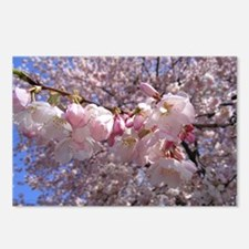 Cool Washington dc cherry blossom Postcards (Package of 8)