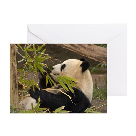 Panda Bear Greeting Cards (Pk of 10)