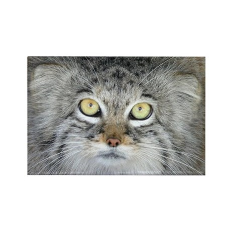 Pallas Cat Rectangle Magnet