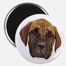 Bullmastiff Puppy Magnet