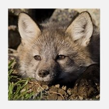 Cross Fox Kit Tile Coaster
