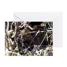 Beaver Greeting Card