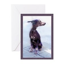Chinese Crested Dog Card Blank/bx10
