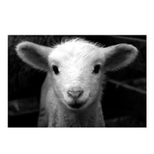 White Lamb Postcards (Package of 8)