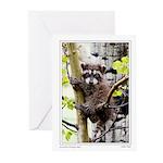 Raccoon in Tree Greeting Cards (Pk of 10)
