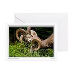 Bighorn Rams Greeting Cards (Pk of 10)