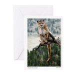 Cougar In Tree Greeting Cards (Pk of 10)