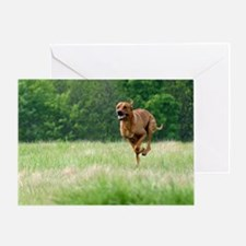 JUBA LEE RIDGEBACK Greeting Card