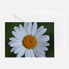 """June Daisy"" Blank Greeting Card"