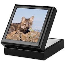 Cross Fox Kit Keepsake Box