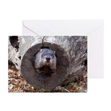 Groundhog Greeting Cards (Pk of 20)