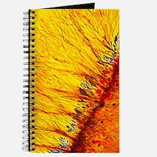 Unique Axon Journal