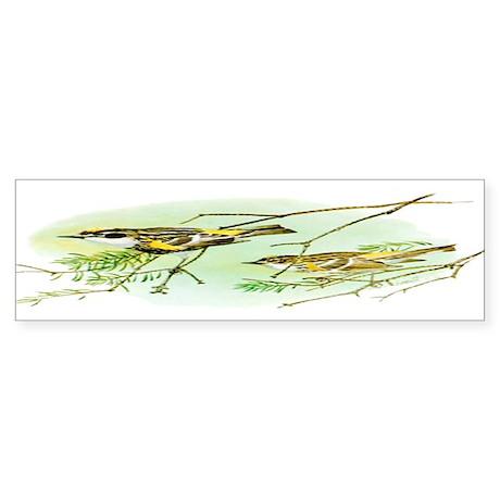 Myrtle Warbler Bumper Sticker