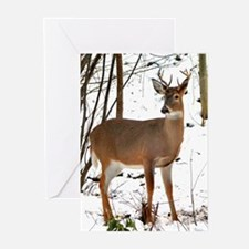 Whitetail Deer Greeting Cards (Pk of 10)
