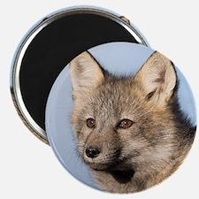 Cross Fox Kit Magnet