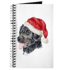 Christmas Stabyhoun Journal