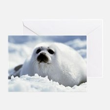 Harp Seal Greeting Card