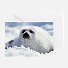 Harp Seal Greeting Card
