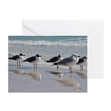 Greeting Cards (Pk of 10) Seagulls