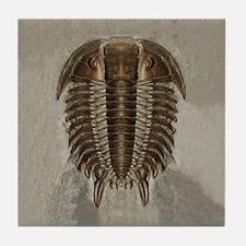 Trilobite Fossil Tile Coaster