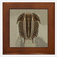 Trilobite Fossil Framed Tile