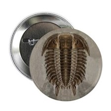 "Trilobite Fossil 2.25"" Button"