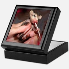 Infant Possum Keepsake Box