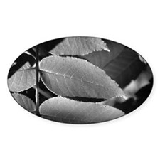 Black and White Leaves Oval Sticker (50 pk)