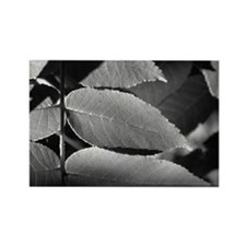 Black and White Leaves Rectangle Magnet
