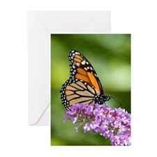 Greeting Cards (Pk of 10) Butterfly 2
