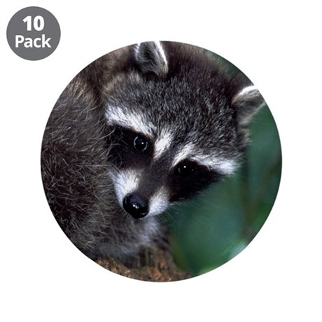 "Raccoon 3.5"" Button (10 pack)"