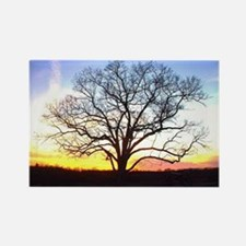 Pretty Tree Silhouette Rectangle Magnet