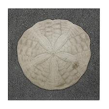 Sand Dollar #3 Tile Coaster