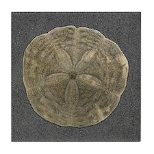Sand Dollar #2 Tile Coaster