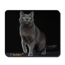 Cute Korat Mousepad