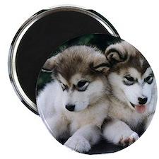 The Huskies Magnet