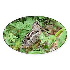 Female Woodcock Oval Decal