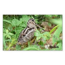 Female Woodcock Rectangle Decal