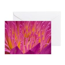 Greeting Cards (Pk of 10) Waterlily 4
