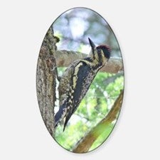 Yellow-bellied Sapsucker Oval Decal