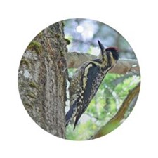 Yellow-bellied Sapsucker Ornament (Round)