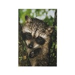 Baby Raccoon Rectangle Magnet (10 pack)