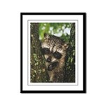 Baby Raccoon Framed Panel Print