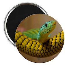 Green Mamba Snake Magnet