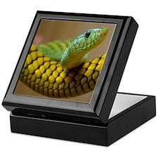 Green Mamba Snake Keepsake Box