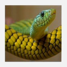 Green Mamba Snake Tile Coaster
