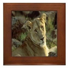 African Lioness Framed Tile