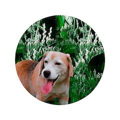 Beagle's Pic 3.5